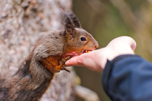 Feeding a squirrel | by Tambako the Jaguar