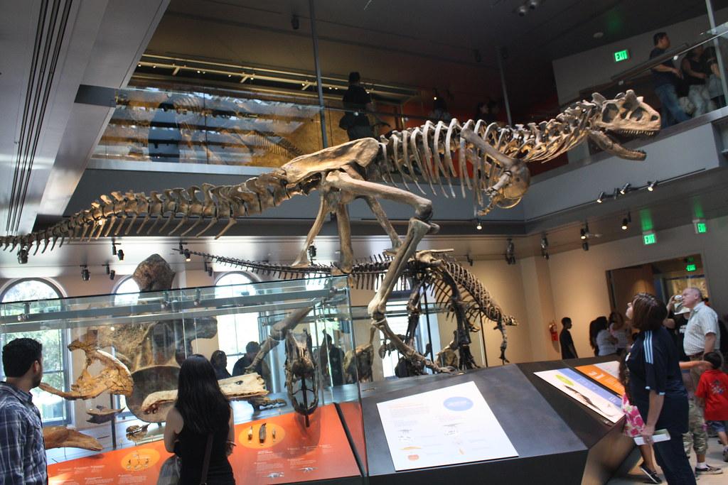 Jobs Natural History Museum Los Angeles