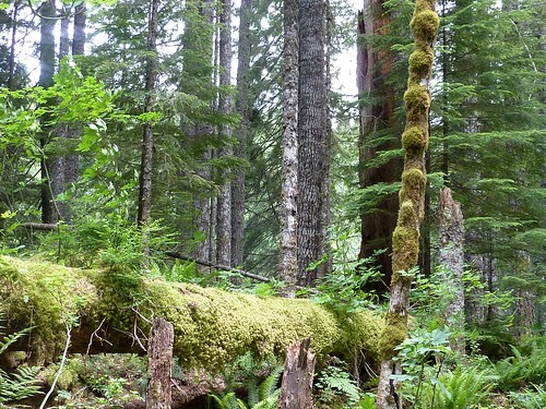 nurse log | by pianomom2001