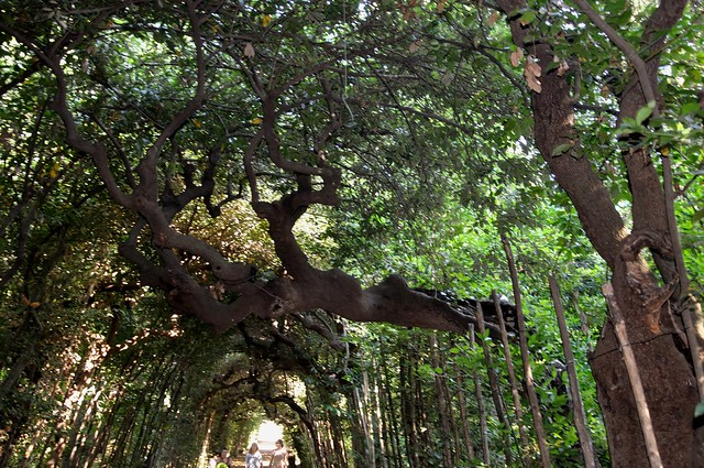 Flickr photo sharing for Jardines boboli