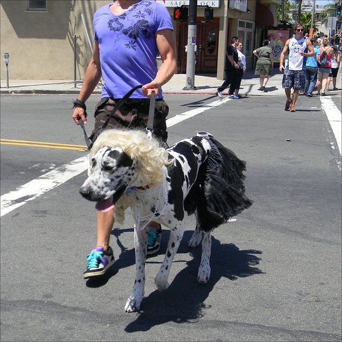 Fido as a Dedicated Follower of Fashion | by Dom Guillochon