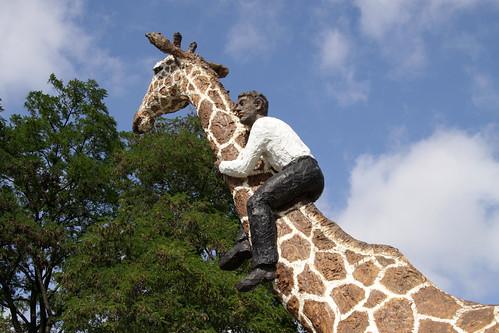 mann auf giraffe nks mitue flickr