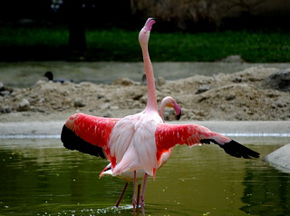 Happy Flamingo | by Gery Singer