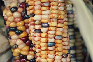 indian corn | by PepOmint