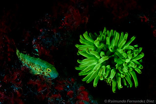 Favourite fluorescence subjects together | by Rai Fernandez