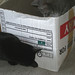 Cats and Boxes (2)