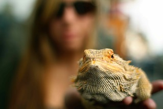 Girl With a Bearded Dragon, Victoria | by Duncan R S Harvey