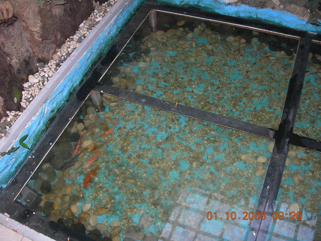 Aquarium under the glass floor andreadhj flickr for Floor aquarium