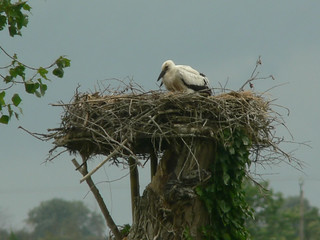 2 Stork young on nest | by nmahieu