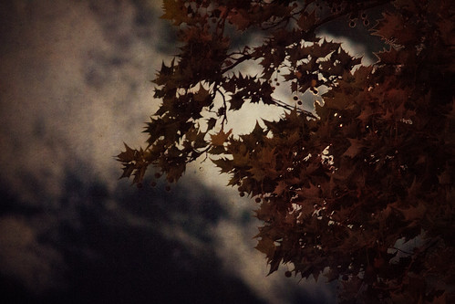 Moonlit Leaves | by kirberich