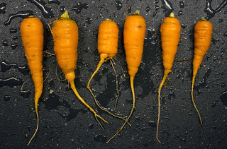 carrot harvest: short squat, and flavorful | by woodleywonderworks