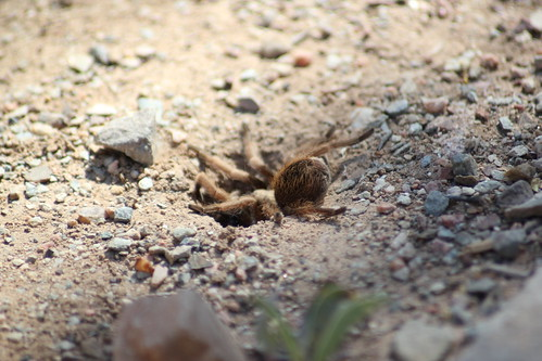 Wasp 1, Tarantuala 0 | by crume