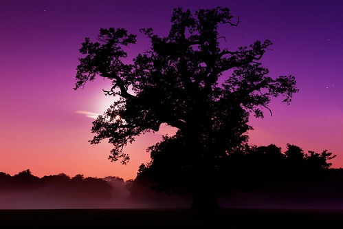 Entangled (Moonlit Mist), Cassiobury Park | by flatworldsedge