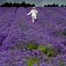 UKWP Lavender Shoot (142 of 217)