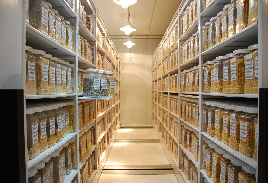 Maize Active Collection Cimmyt Germplasm Bank Shelves