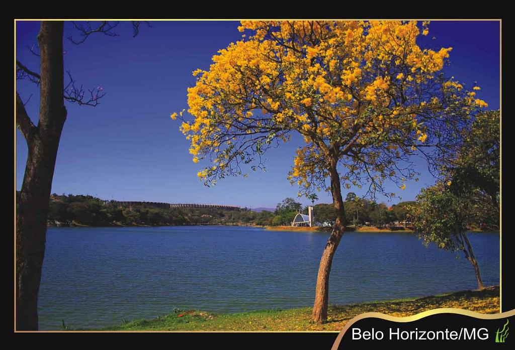 Resultado de imagem para ipês de Belo Horizonte