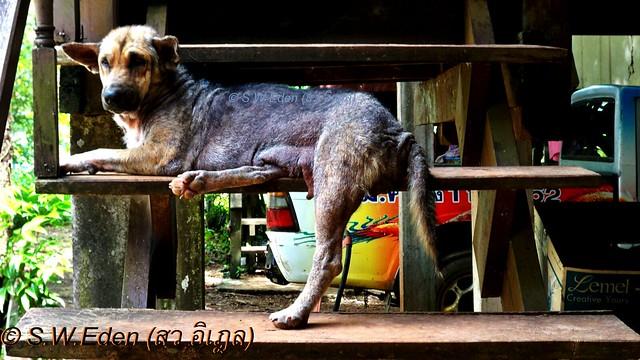 โรคไต หมารักษาไม่หายหลายตัว และตายหลายตัวเช่นกัน