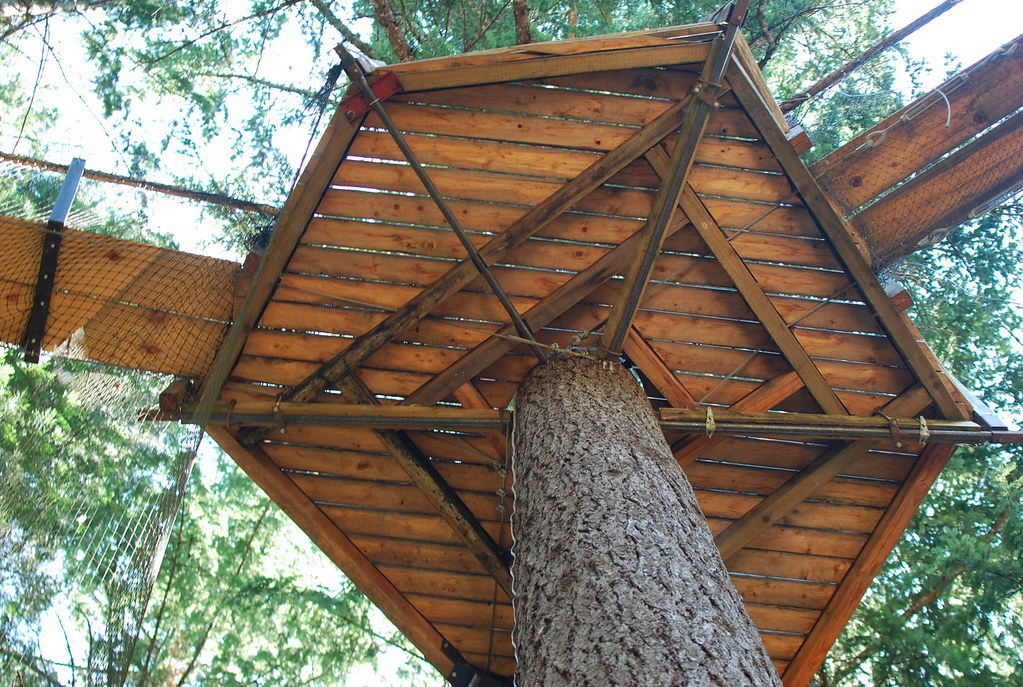 Treehouse Platform From The Ground Nicol 225 S Boullosa Flickr