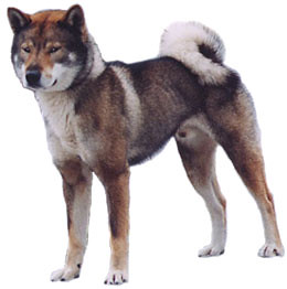 Picture Images Of All Dog Breeds