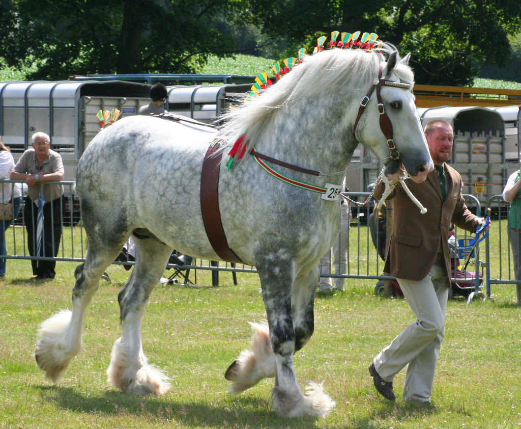 Grey Shire Horse | Richard Coleman | Flickr