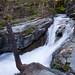 Glacier National Park #61