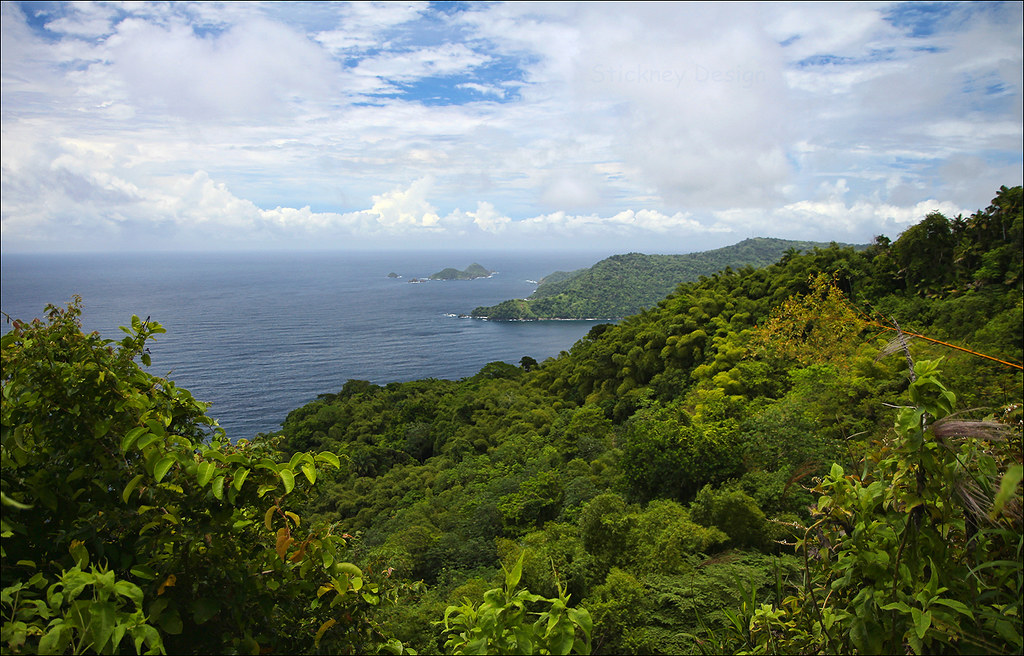 Tobago Forest Reserve Tours