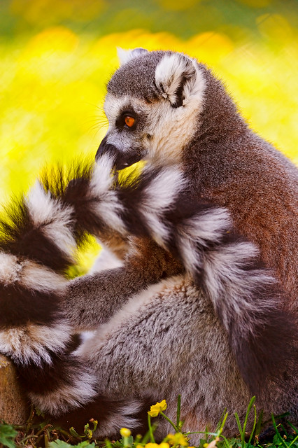 Phil Lemur And Property Restoration Services In Florida