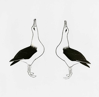 Illustration of Laysan albatross, circa 1961-1973. | by Smithsonian Institution