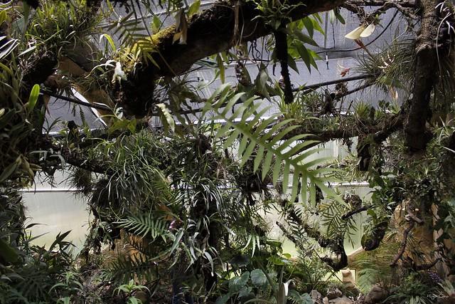 Jardin botanico orqu deas moxviquil san cristobal de las for Jardin botanico san felipe