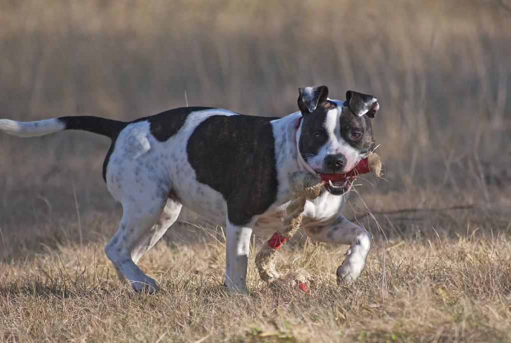 Dog S Eyesight Problems