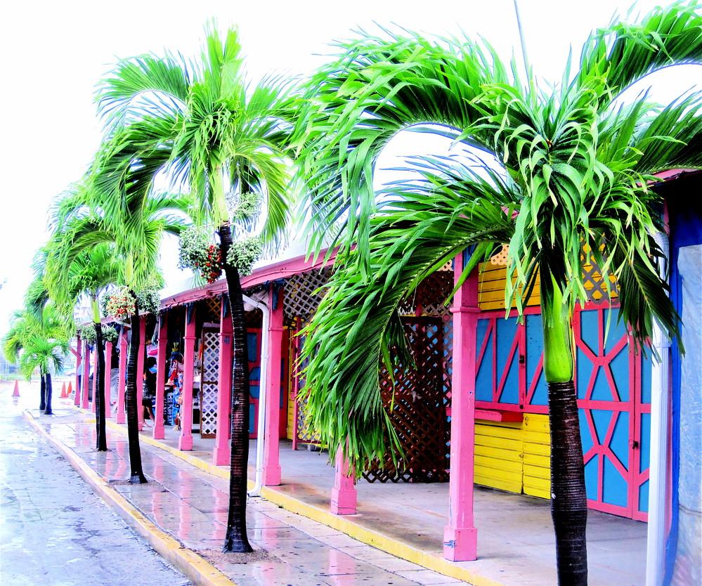 bahamas port lucaya marketplace palm trees colors ...