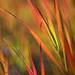 Karen's Grass
