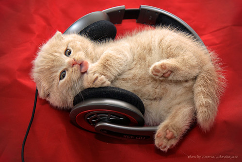 little cat enjoying music | by vvvita_