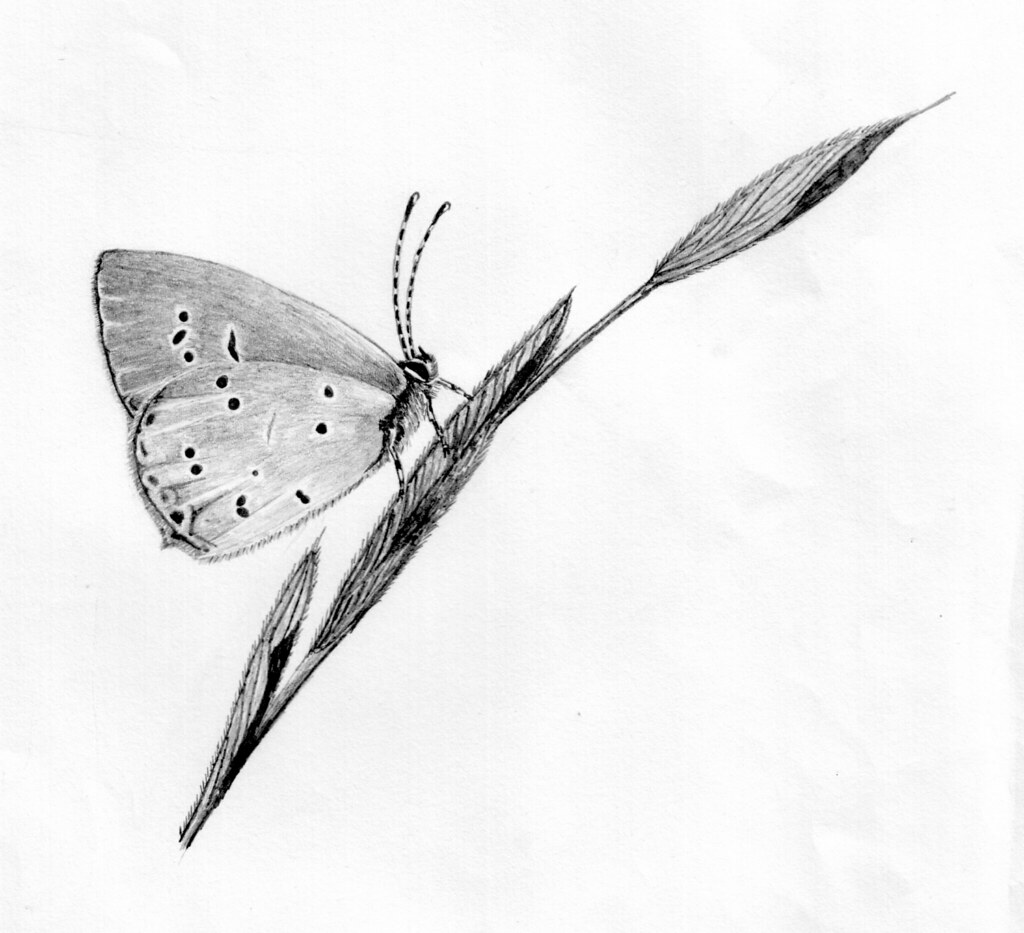 Butterfly Pencil Drawing | Pencil Drawing Of A Butterfly Donu2026 | Flickr