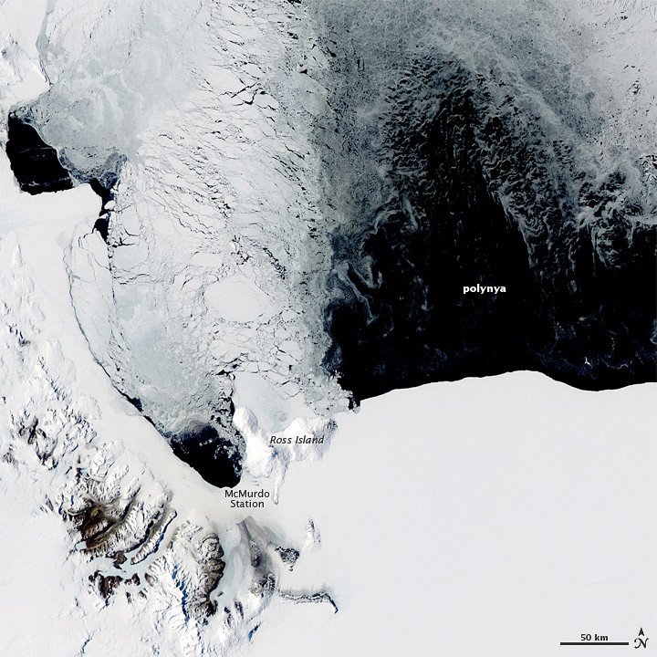 Image result for polynya