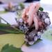 Austernchips   Squid