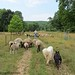 Heading out to the front field after working the sheep 1