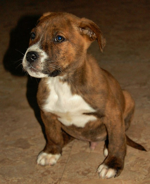 Where To Adopt Dogs In Lancaser Pa