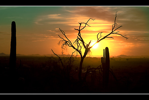 Desert Tree in Sunset | by Alfredo Hernandez Photography