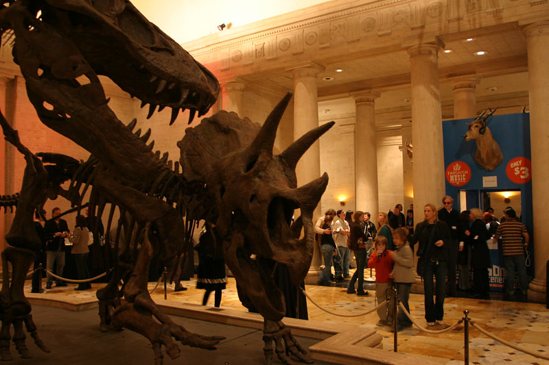 Foyer Museum Jobs : Dueling dinos in the grand foyer natural history