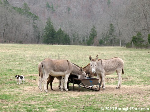 But I don't wanna leave Donkeyland | by Farmgirl Susan