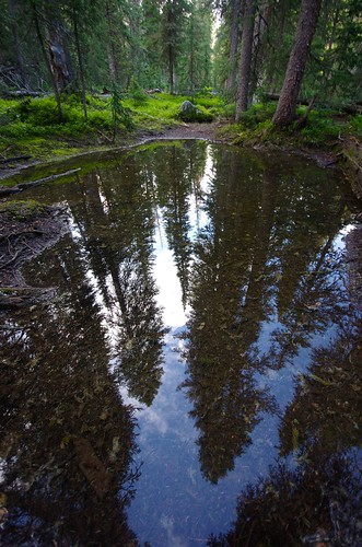 Reflecting Pines | by AlphaTangoBravo / Adam Baker
