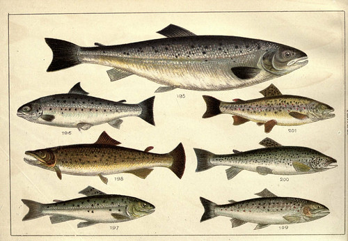 N67 w1150 our country 39 s fishes and how to know them for Hamilton fish library