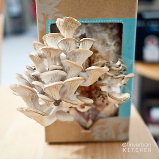 Back to the Roots Oyster Mushroom | by tinyurbankitchen