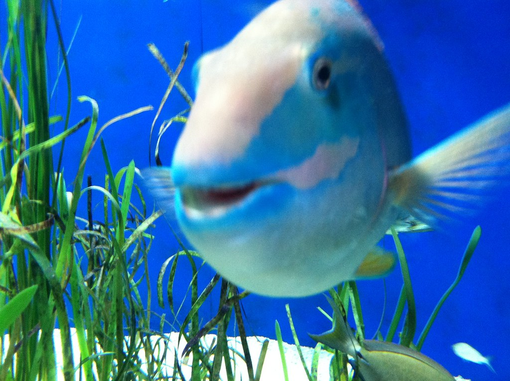 Image gallery smiling fish for Fish is fish