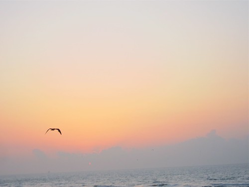 Seagull at dawn | by therealjoeo
