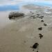Lake Eyre flood, footprints