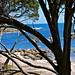 Geographe Bay , SW Australia