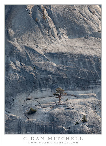 Tree and Granite, Pywiack Dome | by G Dan Mitchell