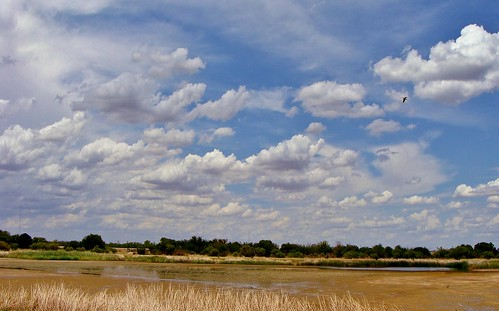 drought in Texas--flickr blogged--thank you flickr team | by spysgrandson--thanks for 2,000,000 views!